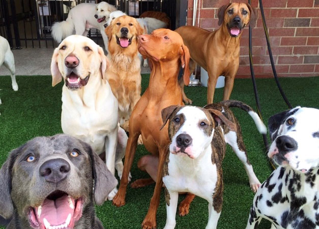 Group of smiling dogs